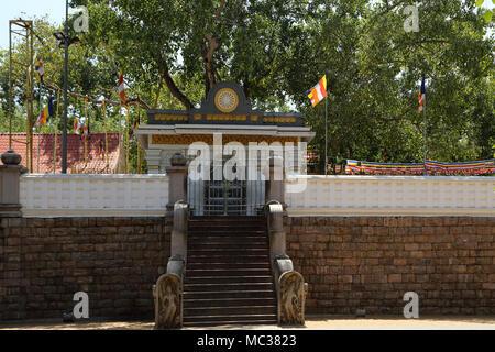 Anuradhapura North Central Province Sri Lanka Sri Maha Bodhi Banque D'Images