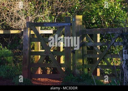 Kiss en bois sur une porte de ferme dans le Devon en Or Gris Lumière de l'aube. Ludwell Valley Park, Exeter, Royaume-Uni. Avril, 2018. Banque D'Images