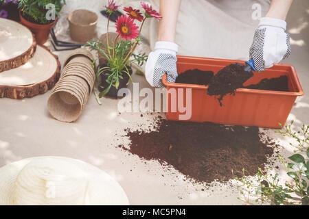 Personne avec des gants sur les mains, fertiliser le sol au conteneur lors de travaux de jardinage