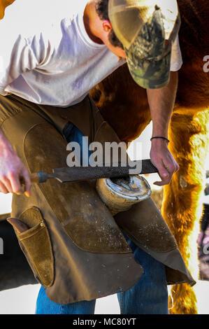Un maréchal-ferrant travaille sur un cheval à un événement équestre au Mississippi Banque D'Images
