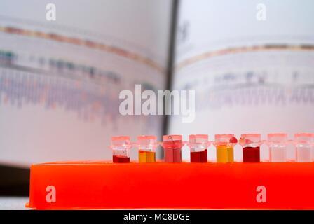 L'ADN (acide désoxyribonucléique) research, conceptual image. Banque D'Images