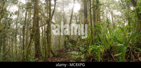 L'intérieur de la forêt tropicale de montagne brumeuse. En haut d'une télévision (Tepuy de grès en tête), la montagne au-dessus de Rio Nangaritza Valley dans le sud de l'Équateur Banque D'Images