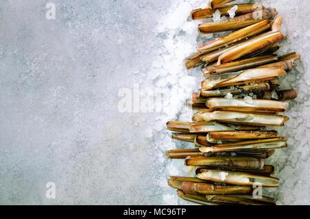 Bundle, tas de mactres frais sur la glace, l'arrière-plan de béton gris. L'espace de copie, vue du dessus, la bannière Banque D'Images
