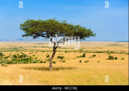 Beau paysage avec des arbres en Afrique personne ne Banque D'Images