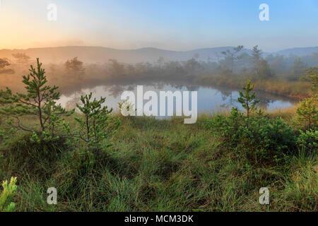 Matin sur le lac marais dans le lever du soleil. Banque D'Images