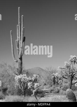Désert de l'Arizona scènes en noir et blanc est de Mesa, Arizona. Banque D'Images