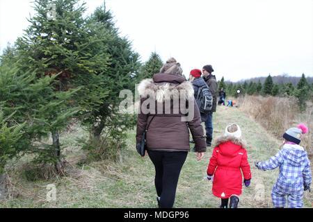 Les gens qui marchent sur un chemin à la recherche d'un arbre de vacances vert