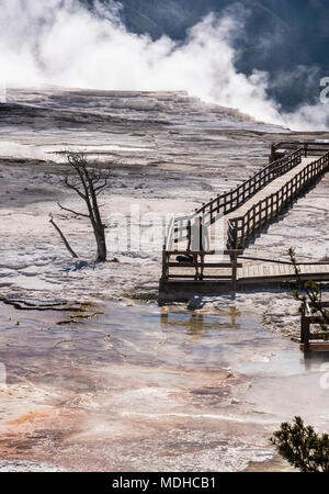 Homme marche sur la promenade à Mammoth Hot Springs, Parc National de Yellowstone, Wyoming, United States of America Banque D'Images