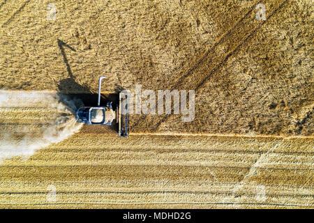 Vue depuis directement au-dessus d'une coupe de moissonneuse-batteuse d'un champ d'orge; Blackie, Alberta, Canada Banque D'Images