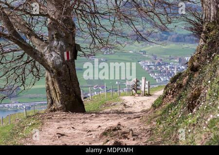 Sentier de randonnée, sentier de marque sur un arbre sur la Montagne Rigi en Suisse Banque D'Images