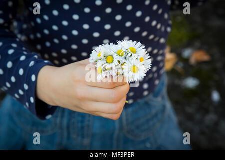 Little girl holding bouquet de marguerites à la main, close-up