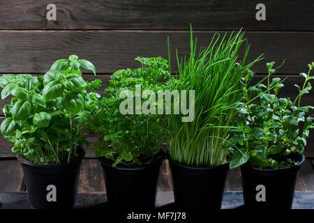 Quatre pots avec diverses herbes Banque D'Images