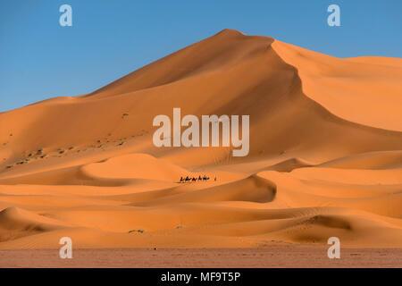 Train, chameau désert Erg Chebbi, Sahara occidental, Maroc