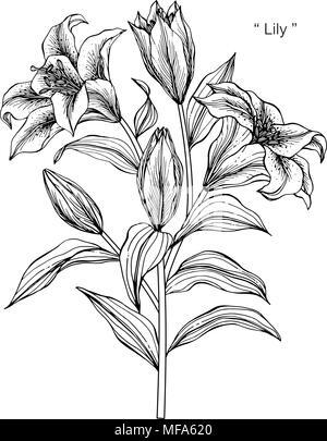 Illustration Dessin Fleur De Lys Noir Et Blanc Avec Dessin Au Trait