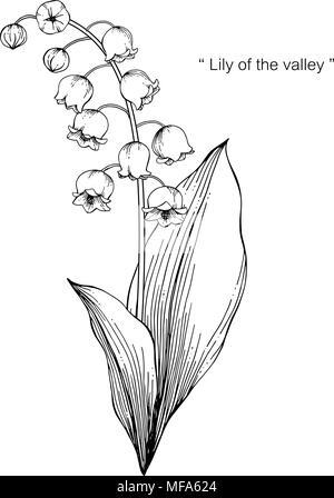 Le Muguet Fleur Dessin Illustration Noir Et Blanc Avec Dessin Au Trait Sur Fonds Blancs Image Vectorielle Stock Alamy
