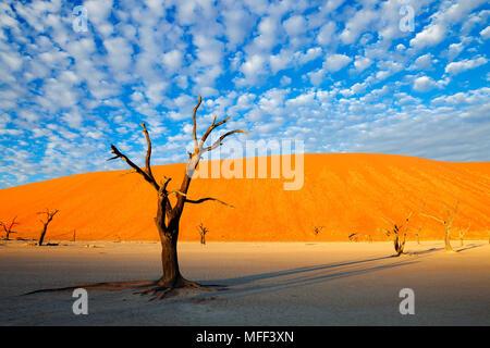 Marais salant. Dead Vlei. La Namibie Banque D'Images