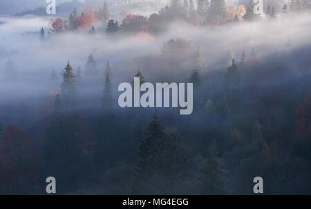Misty forêt de hêtres sur le versant de montagne dans une réserve naturelle Banque D'Images