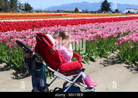 Une jeune fille assise dans une poussette à la vallée de la Skagit Tulip Festival à Mount Vernon, Washington, USA. Le petit rif porte bottes rose et l'axe
