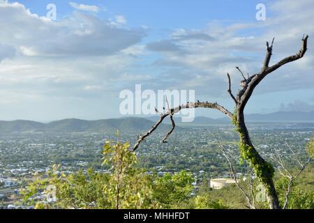 Vues de Townsville du mont Stuart sentiers de randonnée avec arbre mort au premier plan, Townsville, Queensland, Australie Banque D'Images