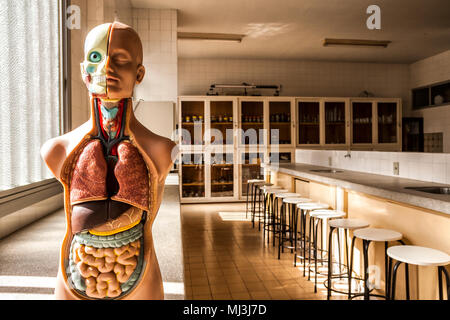 L'anatomie humaine modèle dans le laboratoire de sciences d'une école dans le sud du Brésil. Criciuma, Santa Catarina, Brésil. Banque D'Images