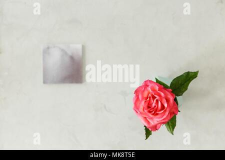 Vue de dessus une rose rose sur fond lumineux avec copie espace. Concept de fleurs d'anniversaire Banque D'Images