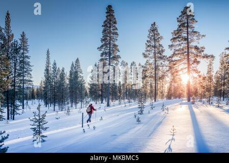 Vue panoramique de l'homme le ski de fond sur une piste dans le magnifique décor hivernal féérique en Scandinavie avec lumière du soir au coucher du soleil à gagner Banque D'Images