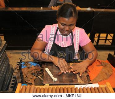 Rouleaux travailleur cigares à l'LaFlor Dominicana fabrique de cigares de la République dominicaine. Banque D'Images