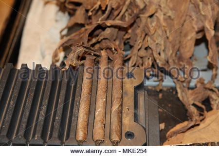 Les cigares roulés fraîchement dans un cigare appuyez sur le long avec des feuilles de tabac sur l'établi d'un rouleur de cigares à l'LaFlor Dominicana fabrique de cigares dans la Domi Banque D'Images