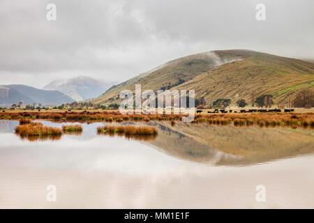 Un matin brumeux sur les fermes, les lacs et les collines de Canterbury, Nouvelle-Zélande. Banque D'Images