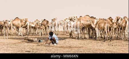 Homme avec des chameaux dans le désert Saharah Banque D'Images