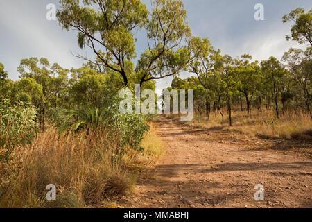 Paysage avec des terres boisées d'eucalyptus rompu par chemin de terre étroit dans Minerva Hills National Park, près de Springsure, Queensland Australie Banque D'Images