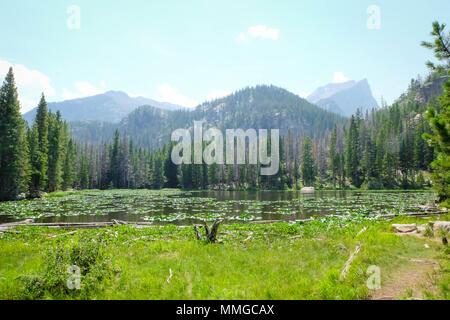 Lac de nymphe, Rocky Mountain National Park, Colorado Banque D'Images