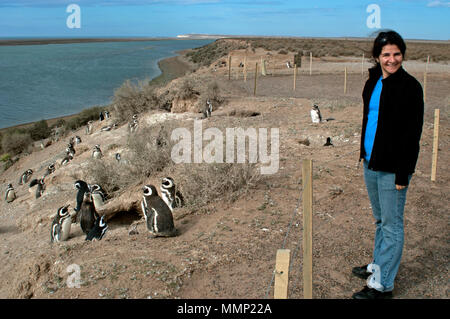Les manchots de Magellan, la femme observe Spheniscus magellanicus, à la Caleta Valdes, Peninsula Valdes, Chubut, Patagonie, Argentine
