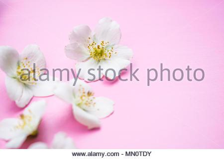 Fleurs de printemps Banque D'Images
