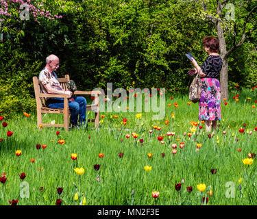 Britzer Garten, Neukölln, Berlin, Allemagne. En 2018. Femme en vêtements floral prend photo d'un homme âgé sur banc de la floraison des tulipes au printemps. Banque D'Images