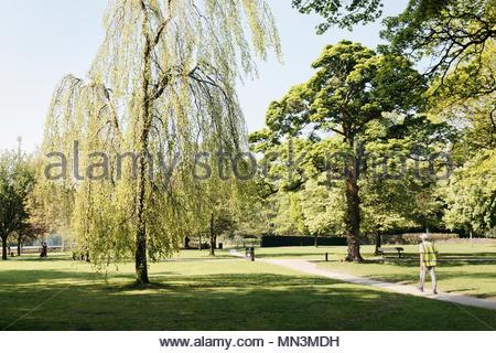08 mai 2018, nouveau ressort sur le feuillage des arbres dans un parc public anglais pommelé soleil en mai Banque D'Images