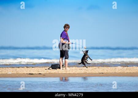 Sunny à Southport, Merseyside. 14 mai 2018. Météo britannique. Belle météo de style méditerranéen sur la côte nord-ouest de l'Angleterre avec les températures chaudes, un ciel bleu et des plages de sable doré comme un petit chien saute de joie comme une femme jette sa balle préférée le long du rivage de la marée montante sur la plage de Southport Merseyside. Credit: Cernan Elias/Alamy Live News Banque D'Images