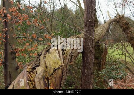 Un arbre tombé avec l'écorce et les feuilles d'automne