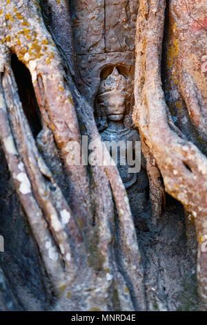 Ancienne statue en pierre cachée dans les racines des arbres dans la zone archéologique d'Angkor au Cambodge