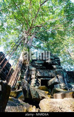Ta Prohm temple jungle dans la zone archéologique d'Angkor au Cambodge Banque D'Images