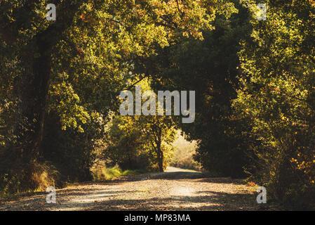 Les arbres de tunnel Banque D'Images