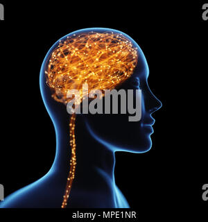 3D illustration. X-ray de la tête et cerveau humain en concept de connexions neuronales et des impulsions électriques. Brille à l'intérieur du cerveau. Esprit puissant. Banque D'Images