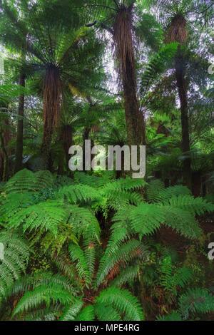 Nouvelle-zélande paysage détails forêt tropicale photo Banque D'Images