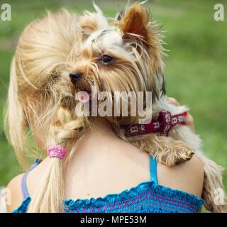 Yorkshire Terrier sur l'épaule de 6 ans, fille, à gauche. Banque D'Images
