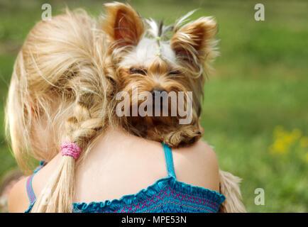 Yorkshire Terrier sur l'épaule de 6 ans. recherche dans l'appareil photo Banque D'Images