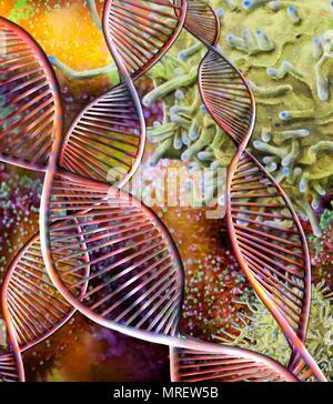 - Immunothérapie, conceptual image composite. La microscopie électronique à balayage (MEB) et de l'image générée par ordinateur (CGI) d'ADN (acide désoxyribonucléique) molécules (hélices alpha) et d'un globule blanc par les lymphocytes T (en haut à droite). Thérapies, comme l'antigène chimérique recep Banque D'Images