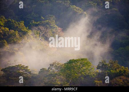 La forêt tropicale humide au lever du soleil dans le parc national de Soberania, République du Panama. Banque D'Images