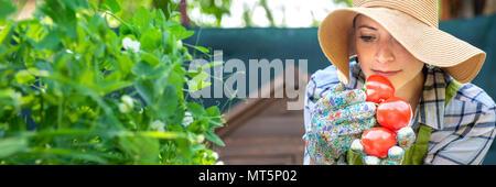 Belle petite entreprise jeune agriculteur qui sent les tomates fraîchement récoltées dans son jardin. Homegrown bio produit concept. Propriétaire de petite entreprise. Bannière. Banque D'Images