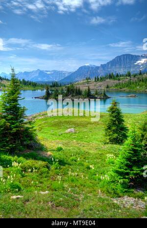 Superbe Rock Isle des Rocheuses canadiennes. Petit étang dans les Rocheuses avec une petite île de roche, arbres et l'herbe. Fleurs d'été. Banque D'Images