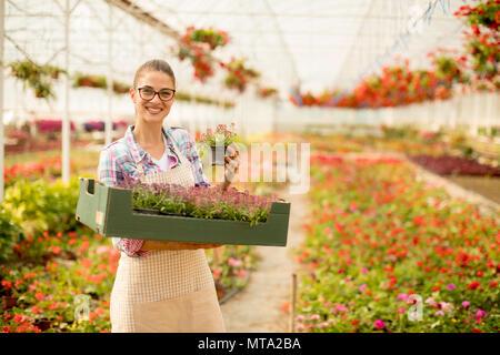 Jolie Jeune femme tenant une boîte pleine de fleurs de printemps dans la serre
